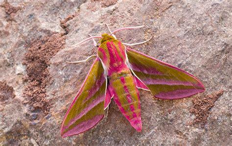 secret life  moths country life