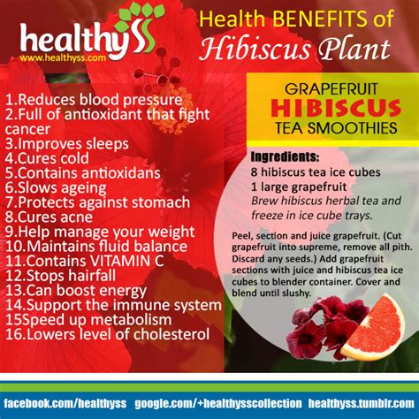 benefits of houseplants hibiscus is one of the most sought after flowering plants