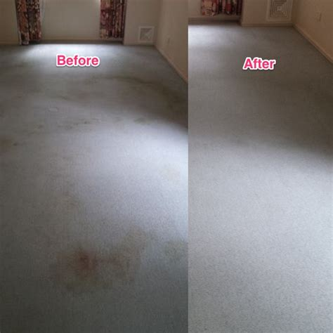 Dry Carpet Cleaners Sunshine Coast Carpet Cleaner