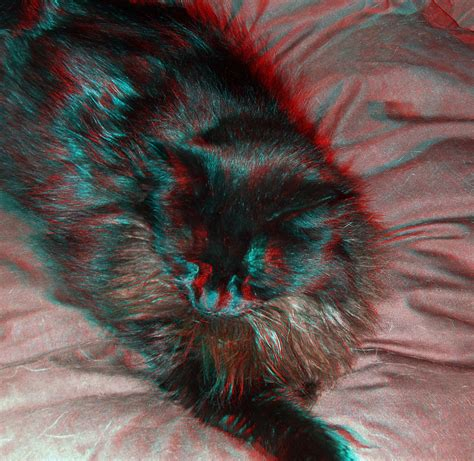 wallpaper cat 3d glasses black cat in anaglyph 3d red blue glasses to view 3d