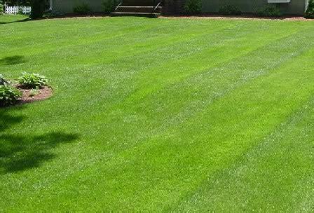 tappeti zebrati vendita trendy semi di prato miscuglio green kg with tappeto