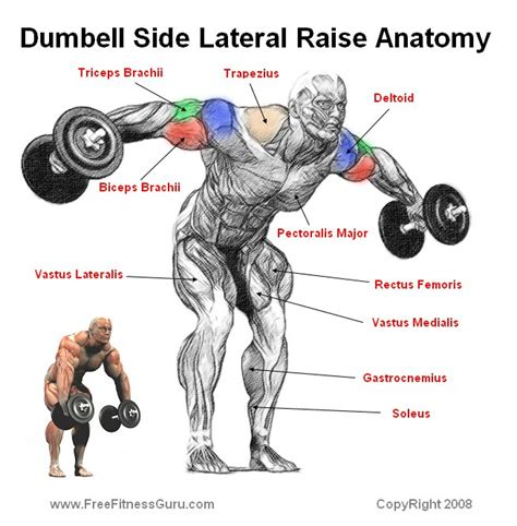 Does Decline Bench Press Work Freefitnessguru Dumbell Side Lateral Raise Anatomy