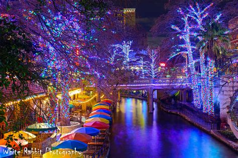 san antonio riverwalk christmas lights white rabbit