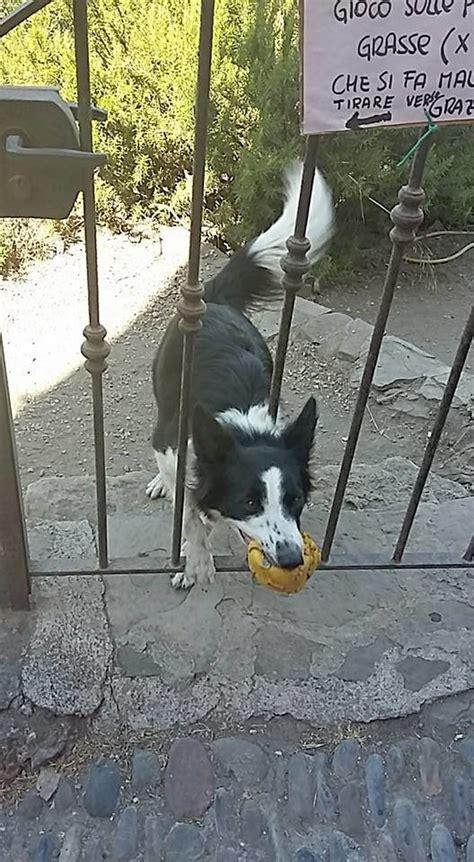 perro travieso perro travieso insiste en jugar con desconocidos su due 241 o