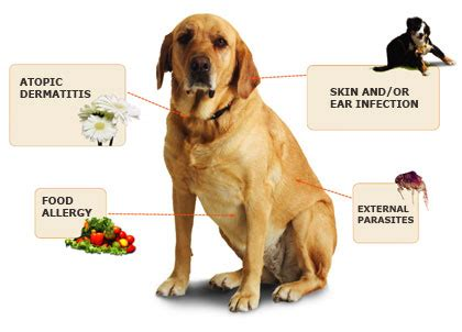 what to do for dogs skin itchy skin in dogs