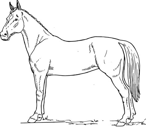 coloring pages of horses and ponies horse coloring pages 3 coloring pages to print