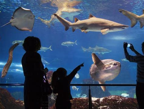 book barcelona aquarium tickets online attractiontix