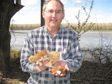 rob found morels found when lilacs bloom northlake us