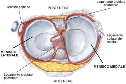 fastidio interno ginocchio meniscopatia degenerativa mariani fisioterapia