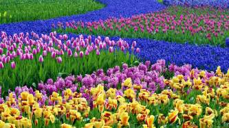 Flower Spring by Early Spring Flowers Wallpaper