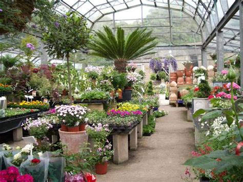 Garden Of Nursery How To Buy Plants On Clearance And Which Ones The