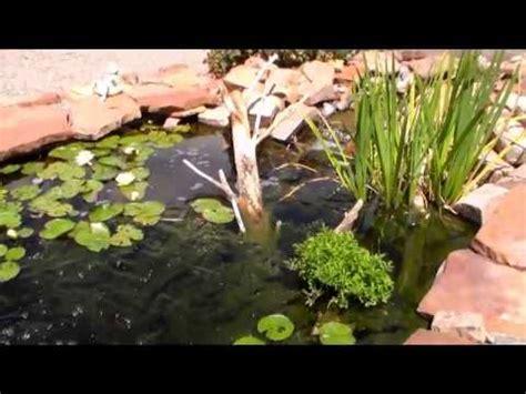 backyard bass pond backyard bass pond pond update 1 youtube