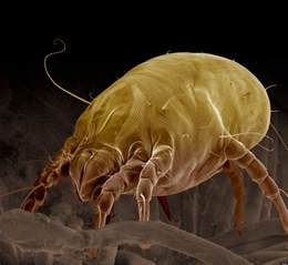 what if we re all dust mites on somebody else s mattress