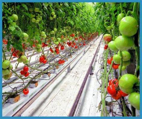 Modern Drip Irrigation Systems Set You Free