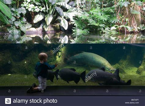 zoologischer garten berlin aquarium a boy in front at the aquarium in the berlin