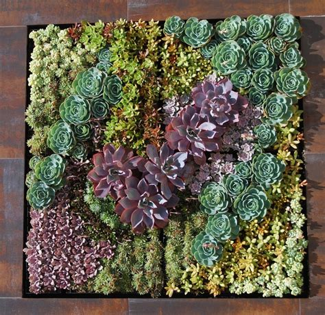Hanging Wall Planter by A Succulent Wall Art Products I Love Pinterest