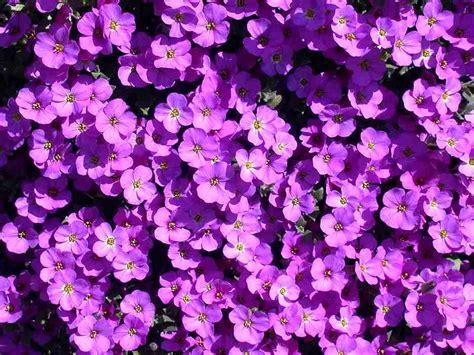 mostra dei fiori firenze firenze mostra dei fiori piazzale degli uffizi diventa