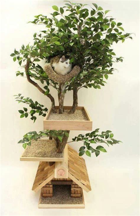real tree or fake foe cats 277 best cat trees scratchers images on pets kittens and cat furniture