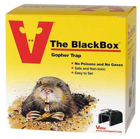 best gopher trap reviews p cinch traps for gophers for