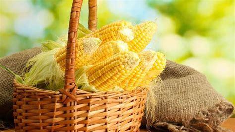 suka makan jagung rebus  manfaatnya buat kamu beauty