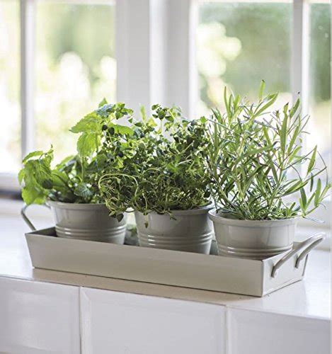 Indoor Windowsill Herb Garden by Kitchen Herb Pots Wooden Planter Window Sill Garden Plant