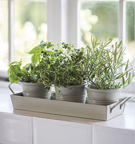 kitchen herb pots wooden planter window sill garden plant