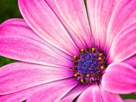 flowers photos macro flowers photos