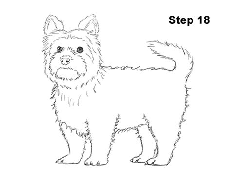 would you step on a puppy for 18 billion how to draw a terrier