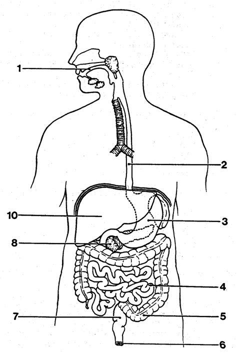 organs diagram for blank diagram of digestive system anatomy human