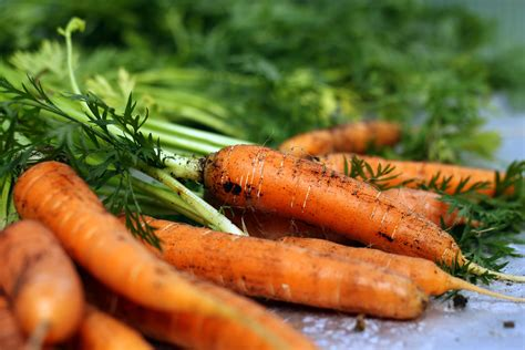 when to pick carrots from your garden