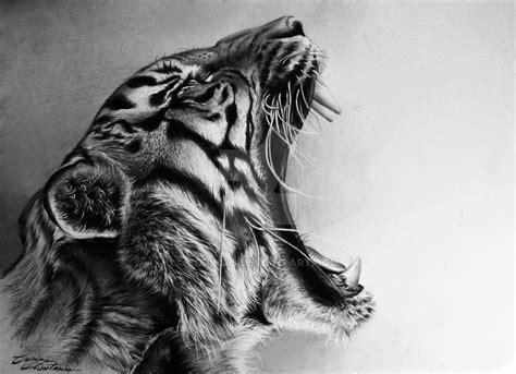 tiger roar by corinao on deviantart