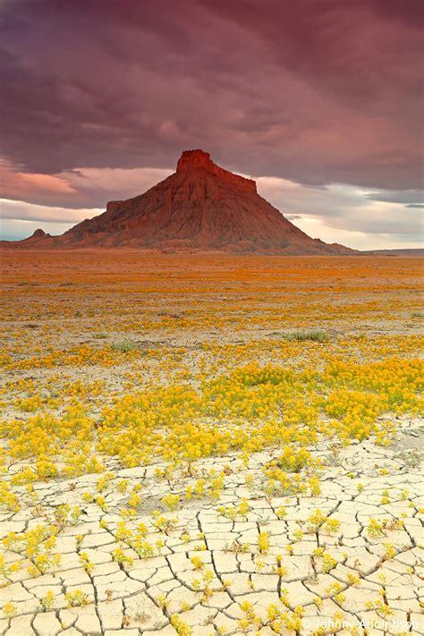 il meteo co dei fiori con le giuste condizioni meteo il deserto dello utah