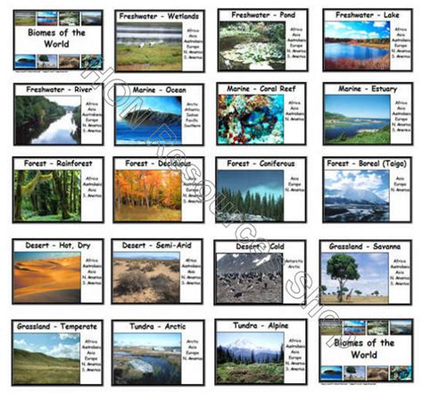 I Found A Gift Card Can I Use It - biomes of the world 20 printable flash cards by honresourcesshop