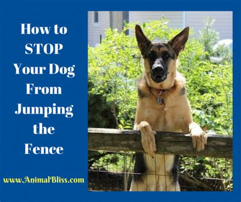 how to stop my puppy jumping on the sofa how to stop your dog from jumping the fence animal bliss