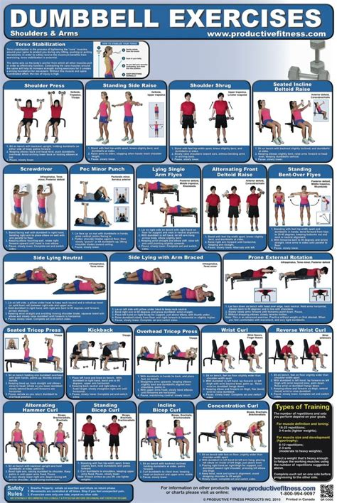 educational chart dumbbell exercises shoulder and arms