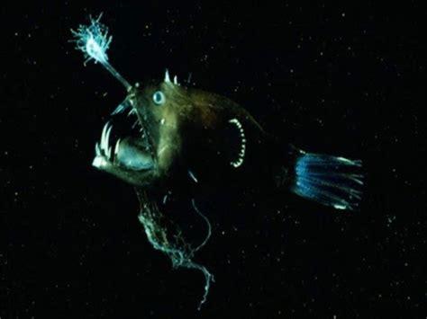 gambar iblis gambar iblis laut yang ditemui dalam kegelapan laut dalam