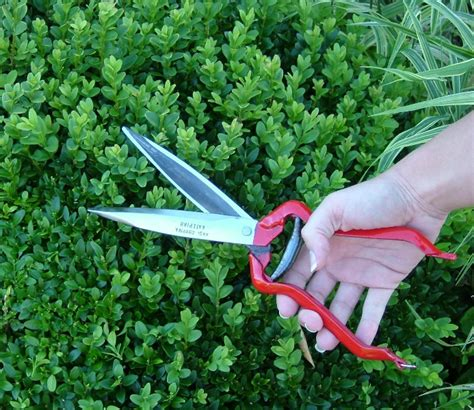 topiary trimmers telegraph chooses best hedge shears in uk come and grow