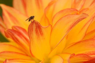 Kleine Fliegen In Der Küche An Der Decke by Kleine Fliegen In Der K 252 Che So Werden Sie Die Tiere Los