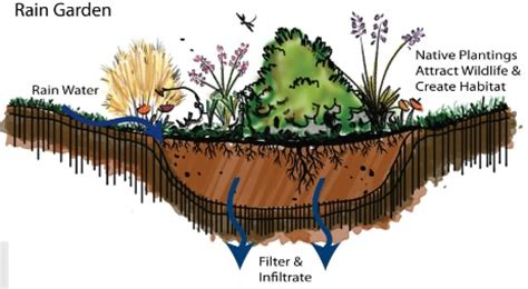 rain garden section do you have stormwater issues