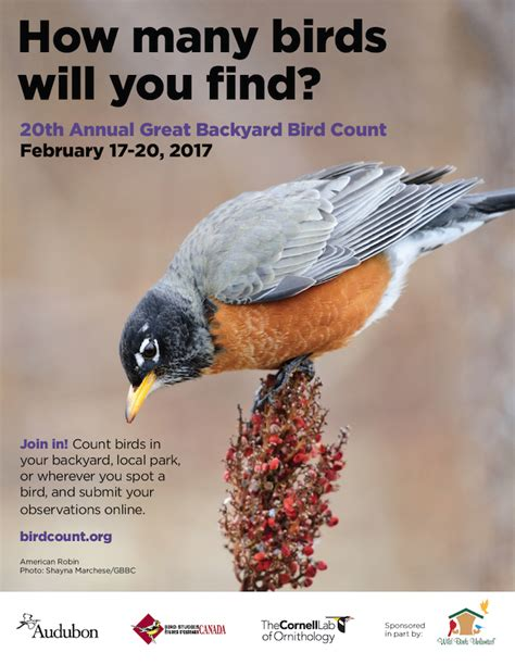 Great Backyard Bird Count 2017 Great Backyard Bird Count Wintu Audubon Society