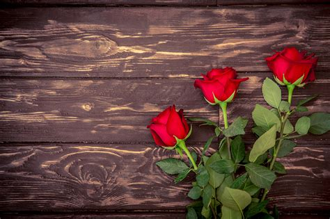 imagenes tres rosas fondos de pantalla rosas tablones de madera rojo tres 3