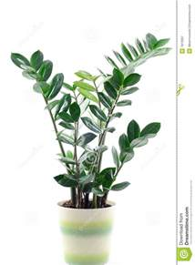 Patio Plant Stands Green Plant Pot Rseapt Org