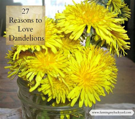 Resons To Detox Your With Dandelion by 17 Best Images About Dandelion Recipes On
