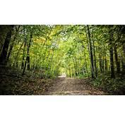 Autumn Forest Road Ultra HD Wallpaper  UHD WallpapersNet