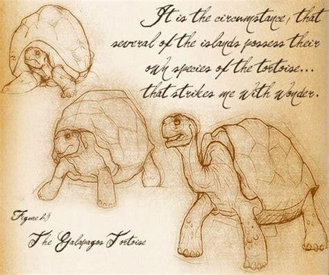 S Drawing Origin by A Sketch Of The Galapagos Tortoise By Darwin Darwin