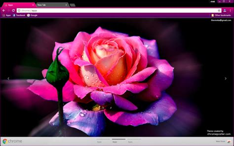 theme violet rose purple rose chrome theme chromeposta