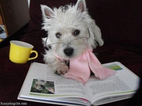 puppy studying study funnydogsite