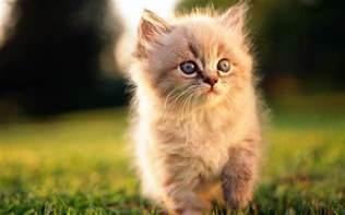 beautiful kittens world most beautiful kittens xcitefun net