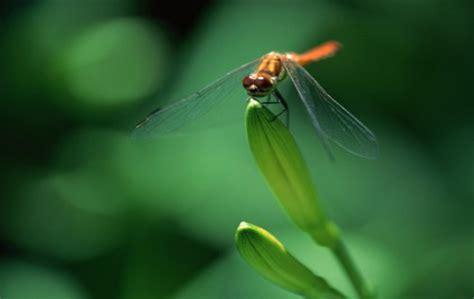 dragonfly desktop app dragonfly backgrounds wallpaper cave