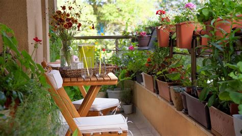 urban gardening ideas tips  products  small